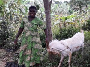 New goat for Wamalu